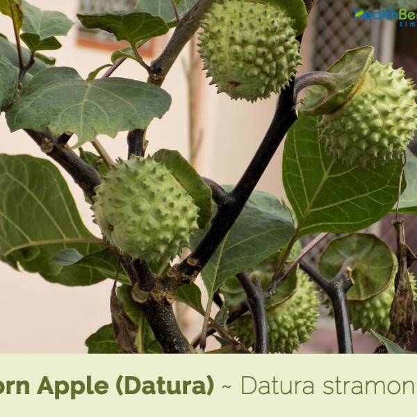 Dhatura Fruit Set Of 5pc By Timeshopee