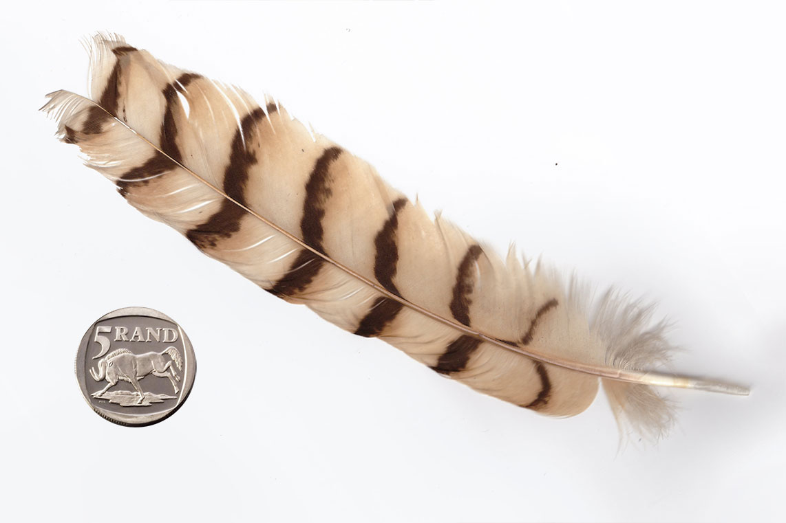 High quality scare natural Owl tail feathers
