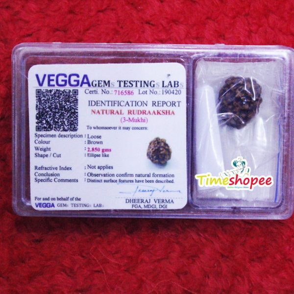 3 Mukhi Rudraksha Three Faced Nepali Rudraksh Bead Original & Certified for Men and Women By Timeshopee