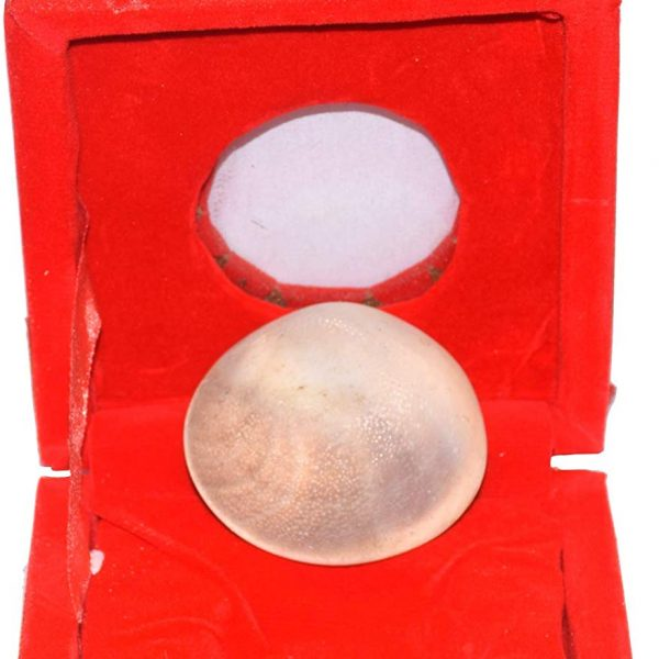 Rare and Giant Stone Gomati Chakra By Timeshopee