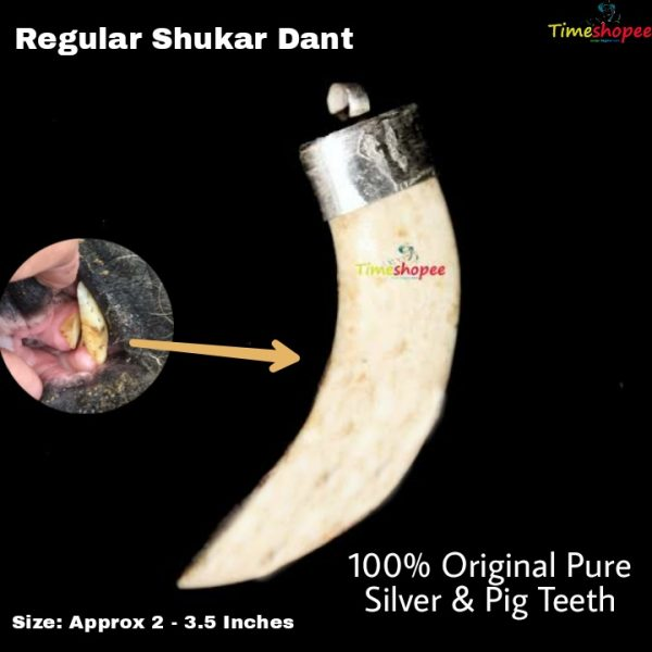 Shukar Dant Energized With Silver Locket Cap 1 Piece By Timeshopee